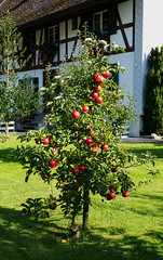 rafz_19_28092014_15'53 (eduard43) Tags: apfel apple rafz 2014 naturprodukte