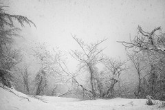 startled (StephenCairns) Tags: trees blackandwhite bw snow japan canon startled snowstorm swallow gifu   swallows motosu   stephencairns canon5dmarkii