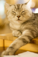 Cute paw (Takashi(aes256)) Tags: animal cat  doraemon   canonef50mmf14usm  catcafe    canoneos7d  nekorobi