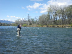 Mike Spey casting a switch rod on the Lower Sacramento River (ShastaTrout) Tags: spring spey lowersacramentoriver