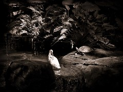 A Quiet Moment with a Friend (Kiki FL) Tags: bird nature monochrome sepia zoo waterfall orlando florida turtle feather olympus ibis oasis duotone wdw waltdisneyworld hen zuiko avian disneysanimalkingdom e5 zd aviculture