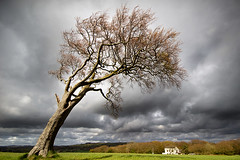 The waiting game........ (Chrisconphoto) Tags: storm tree clouds mood crank goodlight billinge