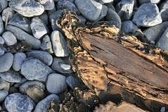 MOMENTS FROM SOMBRIO BEACH  (6) (DESPITE STRAIGHT LINES) Tags: wood sea canada tree beach nature water seaside nikon bc stones britishcolumbia shoreline pebbles driftwood bark d300 nikond300 vancouiverisland ilobsterit