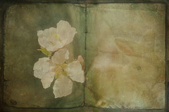 Easter Memories..... (Julka2009...(mostly off)) Tags: sunlight bunny texture netherlands photomanipulation altered vintage easter book spring nikon expression pastel details memories almond manipulation ps layers dreamlike springtime 2012 almondblossom ourtime happyeaster d90 compositie texturized artdigital contemporaryartsociety abigfave nikond90 magicunicornverybest crazygeniuses lenabemanna artcityart