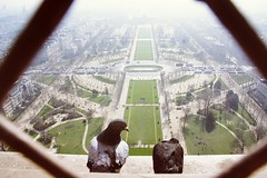 Pigeons make out on the top of the Eiffeltower II (anngu) Tags: paris bird tower love kiss pigeons eiffeltower eiffel