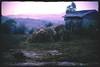 Morning Frost (cormend) Tags: morning travel mist trekking trek canon landscape eos dawn asia frost village purple state hiking sleep farm burma hike hut myanmar inle farmer hay southeast shan touring stay birmanie kalaw 50d cormend