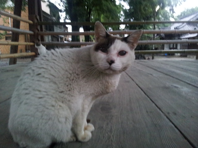 Today's Cat@2012-06-28