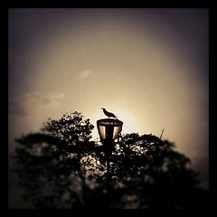 The Lonely Raven! (VinothChandar) Tags: light sun sunlight india bird beach beautiful silhouette mobile marina photography photo photos pics madras picture samsung pic galaxy marinabeach chennai raven s3 instagram