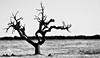 As árvores morrem de pé (Carla Robalo Martins) Tags: árvore campo casabranca portalegre portugal bestofflickr seriousphotographers hitmewithyourbestshot mmartisticphotos musictomyeyes naturestyle umolhovêooutrosente oohlala peaceaward solidaritytochilenow platinumpeaceaward treescompany respectandappreciationforphotography lustauffotos mformessage macroandwonderfulshots magicalmoments mermaidawards micámarayyo micarttttworldphotographyawards miracledelavie monochromic monochromeaward monochromeformsinvisualarts monocromo moongoddessawards photographyidol patagonica pawaward newvision perfectclick photoismyinspiration photoart photofm photographerparadise mouseion myabsolutefavoritepictures mycameraneverlies myfavoritespics myflickrfavs theperfectphotographer worldofdisturbia facebookconstoavete photographyrocks shining★star theloveproject splash 14karatgold ablackrose arealgem richardsqualitybwandsepia gününeniyisithebestofday bestpeopleschoice judojudoelanatura jol lforlightislife imagetrolled imagesforthelittleprince