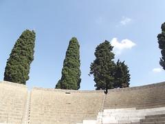 Pompeii - Teatro Grande - trees