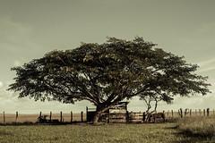 Apure en un viaje. La cochinera (Henry Moncrieff) Tags: venezuela nios plains infancia llanos indgena apure joropo pum