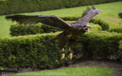 Screamin' Eagle