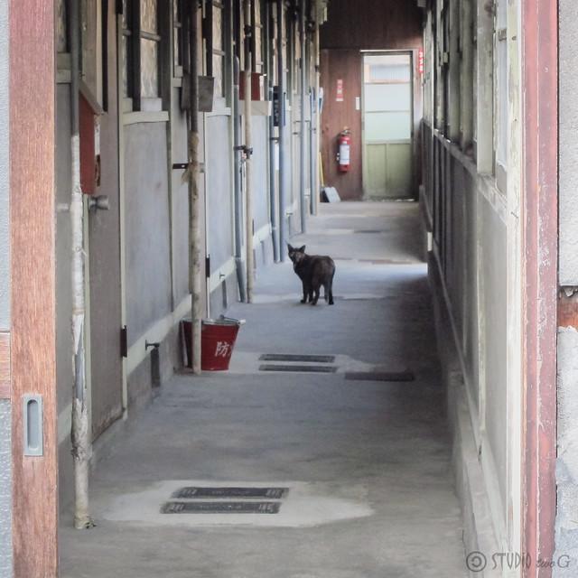Today's Cat@2012-08-13