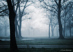 Miracles / Milagros (Claudio.Ar) Tags: plaza morning trees santafe nature argentina fog bravo sony ciudad sanjos dsc topf200 h9 claudioar claudiomufarrege rememberthatmomentlevel1 rememberthatmomentlevel2 rememberthatmomentlevel3 stjosephsquare