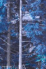 blue (R-Pe) Tags: life blue red white black color rot eye art essen noir nacht live tag fine wiese down right bleu peter rosen blau augen lachen trinken wald bltter baum schwarz chai schmerz blaw 1764 weinen scherz rpe rbi