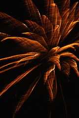 Explosion (Anita K Firth) Tags: november sky orange cold flower night dark fire evening fireworks bonfire sparks pyrotechnics