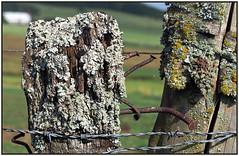 P8090276 Zaun (rightsideoflife) Tags: old fence rust alt nails zaun rost ngel flechten