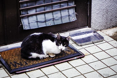 Today's Cat@2016-05-10 (masatsu) Tags: cat pentax catspotting mx1 thebiggestgroupwithonlycats