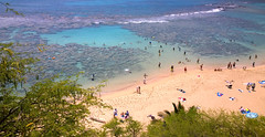 Coral calling. Hanauma Bay (PR Day) Tags: ocean beach coral hawaii seaside hanaumabay