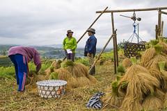 sawah 13 (Fakhri Anindita) Tags: bali nature field indonesia landscape photography nikon farm ubud sawah jatiluwih