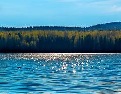 Glimmering Lake (bjorbrei) Tags: lake lakeshore water glimmering shimmering backlight blue forest maridalen maridalsvannet oslo norway