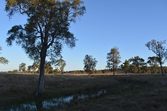 creek (dustaway) Tags: trees winter water creek landscape australia bluesky nsw wetlands australianlandscape lateafternoon paddocks dyraaba ruralaustralia northernrivers richmondvalley edencreekvalley