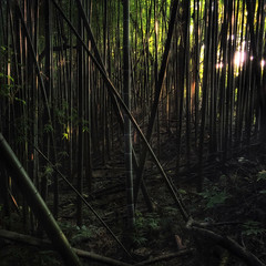 Bamboo Mysteries (JRaptor) Tags: light shadow green japan buddha bamboo explore kiyomizudera buddhisttemple iphone chibaprefecture nakadaki