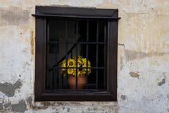 untitled (Zimthiger) Tags: street flowers colors spain fuji streetphotography blumen sunflowers caminodesantiago cantabria sonnenblumen xt1 caminodelnorte zimthiger