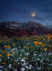 Lifting Shadows Off A Dream (michele.mastrosimone89) Tags: longexposure flowers summer sky moon mountain mountains nature night montagne canon landscape nightscape dream natura luna 1855 fiori montagna notte sogno matese molise 2016 campitello campobasso sannio monfrotto