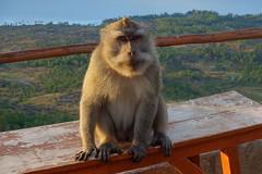 DSC02544 (Peripatete) Tags: bali mountains nature sunrise landscape volcano mount monkeys batur