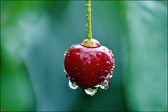 cherry (franciska_bosnjak) Tags: red cherry drops raindrops waterdrops