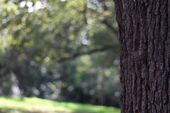 Forest Bokeh (planosdeluz) Tags: forest canon 50mm bokeh bosque campo ligth 18 profundidad 60d