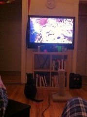 Fry was super-into the big cats on Planet Earth the other night (adambox) Tags: mobile kitty philipjfry