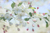 White Apple Blossoms (~Jeannine~) Tags: pink white texture apple blossom expression blossoms textures ie textured crabapple appleblossom motat appleblossoms firstquality contemporaryartsociety awesomeblossoms tatot visionqualitygroup fleursetpaysages blinkagain