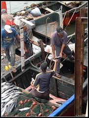 Fresh fish (Shahrazad26) Tags: fish morocco maroc poison vis vissershaven marokko fishingport eljadida