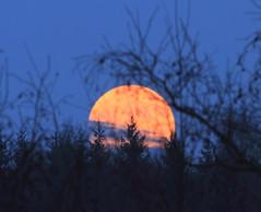 Super Moon_2012_05_05_0002m1 (FarmerJohnn) Tags: cloud moon lake reflection water night clouds canon suomi finland may super calm silence midnight moonlight vesi kuu y laukaa jrvi pilvi keskinen maymoon toukokuu tyyni keskiy kuutamo valkola vedenpinta hiljaisuus lakesurface canon7d supermoon heijatus anttospohja ef30040lisusm superkuu juhanianttonen supermoon5thmay2012