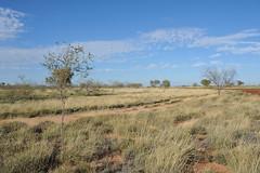 DSC_4157 (Satu Lagi) Tags: outback newman roadtrain porthedland