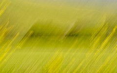 The Mustard Field Gone Wrong (goingslo) Tags: blur blurry modernart artsy fields mustard gonewrong lindatanner bernardocreekroad itsinmynaturephotography