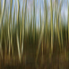 TimeReflectsEverlastingExpressionS #3 (violinconcertono3) Tags: wood trees abstract london nature woodland landscapes movement flickr natural unitedkingdom fineart cityscapes organic fineartphotography davidhenderson fineartphotographer londonphotographer 19sixty3 19sixty3com