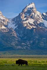 "Home on the Teton Range (IronRodArt - Royce Bair (""Star Shooter"")) Tags: usa mountains america landscape buffalo scenic grandtetons tetons bison roam tetonrange grandtetonnationalpark"