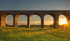 Under the Archway (Vemsteroo) Tags: sunset summer sky coral canon countryside support colours sheep dusk gorgeous transport northamptonshire victorian progress arches trains viaduct journey manmade environment 5d british balance locomotive iconic f4 connection onthemove mobility mkiii harringworth 24105mm ndgrad thewayforward leefilters