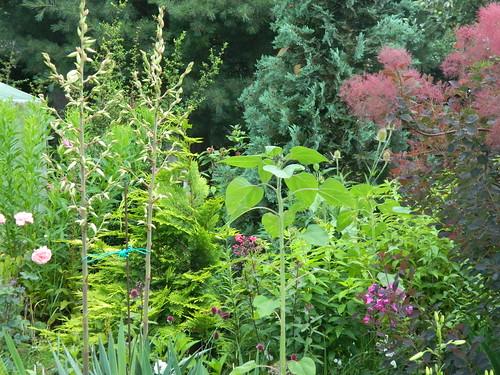 Garden view 096