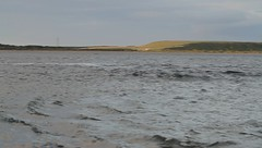 Hunting Dolphins - Chanonry point (Ally.Kemp) Tags: wild fish point highlands fishing hunting salmon dolphins catching moray rosemarkie firth chanonry bottlenose fortrose