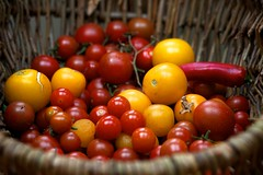 rich pickings (peet-astn) Tags: tomato basket tomatoes harvest greenhouse peppers pomodori pomodoro richpickings