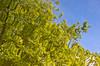 Reflected Tree I (Jon Narbett) Tags: reflection dpsgreen
