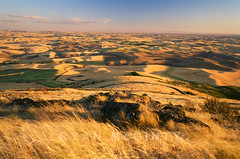 Velvia Palouse (Ryan McGinty) Tags: film landscape washington wheat farmland palouse velvia50 contaxg2 whitmancounty g28 steptoebutte ryanmcginty