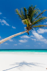 Palmier, Tulum, Mexico (Inti Runa) Tags: voyage travel seascape beach tulum caribbean rivieramaya caribe quintanaroo caraïbes canon30d canon1755mmf28is mexicomexique2008