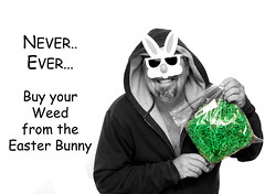 """347 of 365 Days """" Weed """" (cptesco) Tags: bunny easter weed pot buy"""
