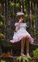 (CureLes) Tags: cute doll bjd dd volks dds dollfiedream  miruhi