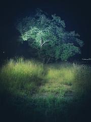 PhoTones Works #7925 (TAKUMA KIMURA) Tags: photones olympus omd em1 takuma kimura   landscape nature night scape tree wood